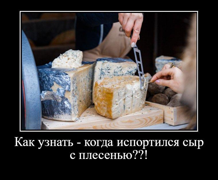Особый сыр